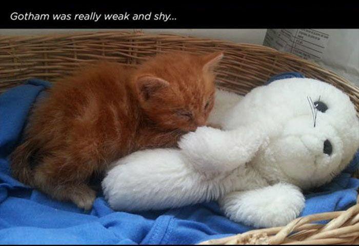 Story of a Cat (13 pics)