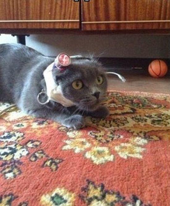 Trolling a Cat (2 pics)