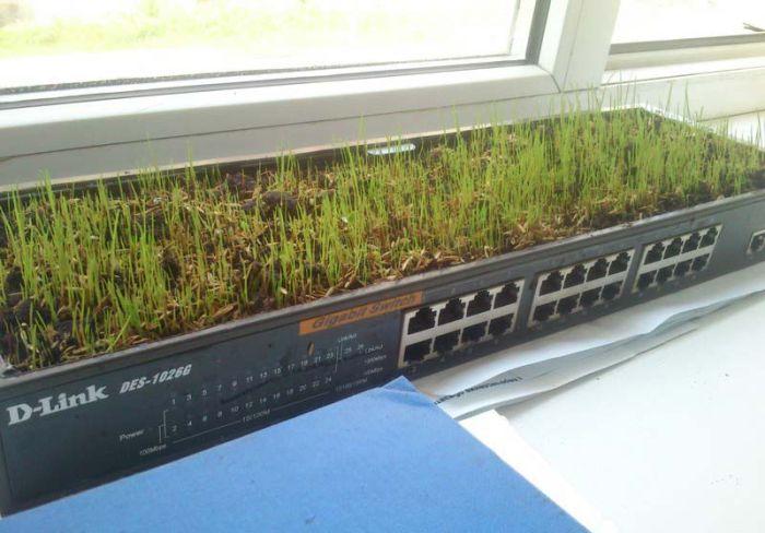 Grass Office (13 pics)