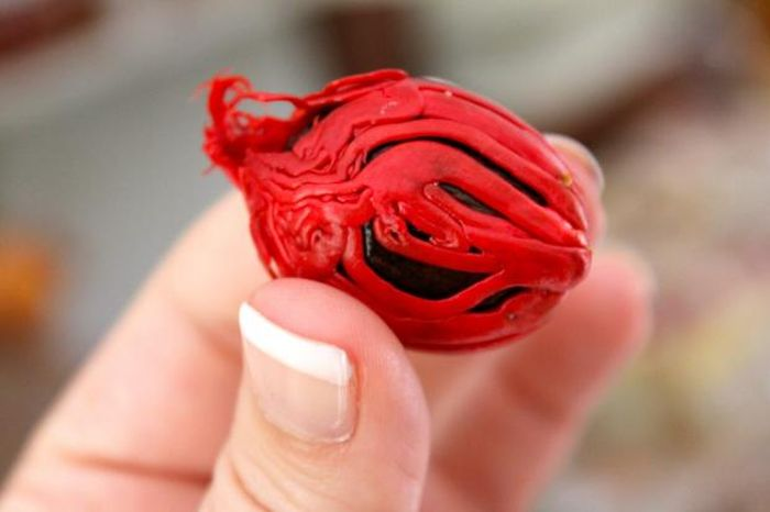 Plants that Come From Unusual Seeds (24 pics)