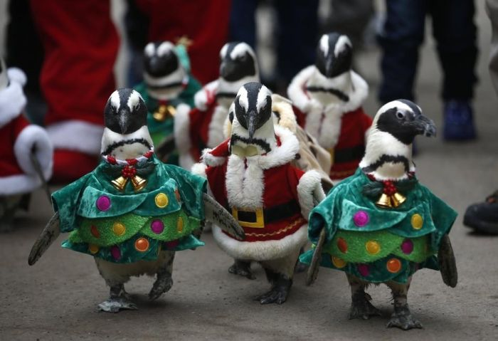 Christmas Celebration Around the World (55 pics)