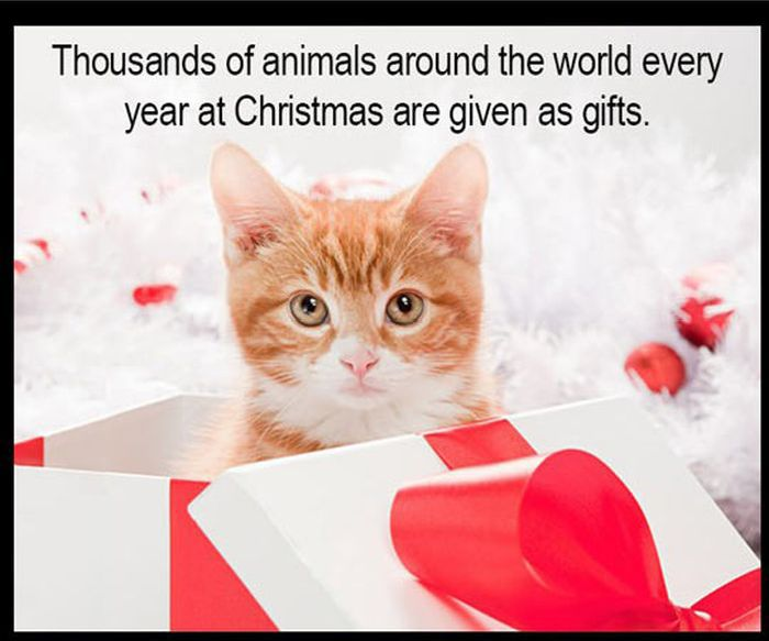 Christmas Kitten/Puppy Rescue (10 pics)
