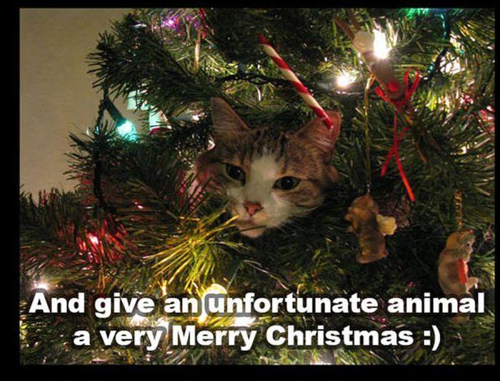 Christmas Kitten/Puppy Rescue (10 pics)