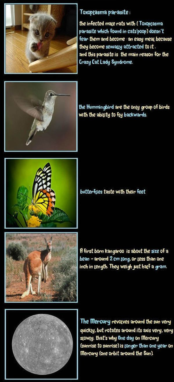 Unbelievable but True Facts (10 pics)