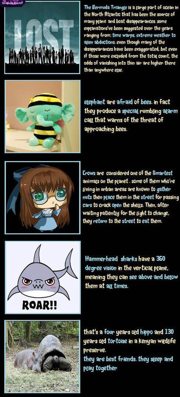 Unbelievable but True Facts (10 pics)