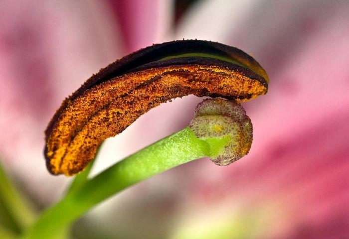 Amazing Macro Photos (99 pics)