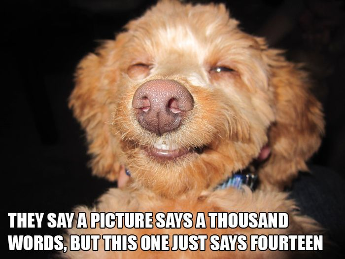 Silly Things on Silly Animal Pictures (15 pics)