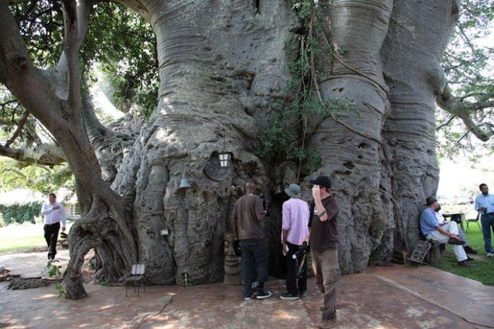 Baobab Tree Bar (8 pics)