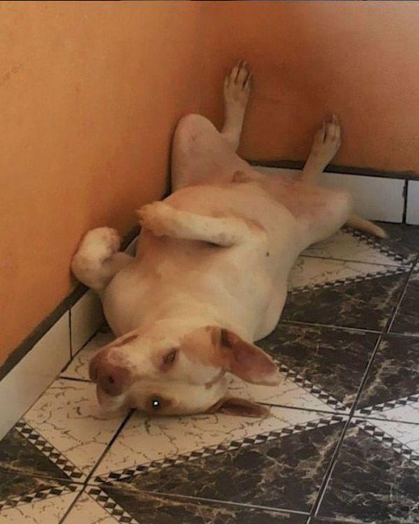 Dog Rescue (23 pics)