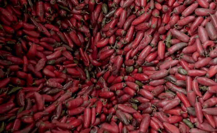 How Sriracha Is Made (23 gifs)