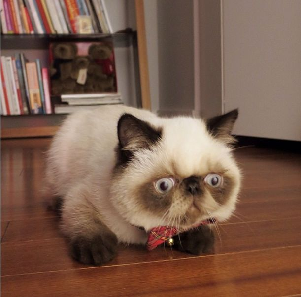 Pugsley the Kitty (30 pics)