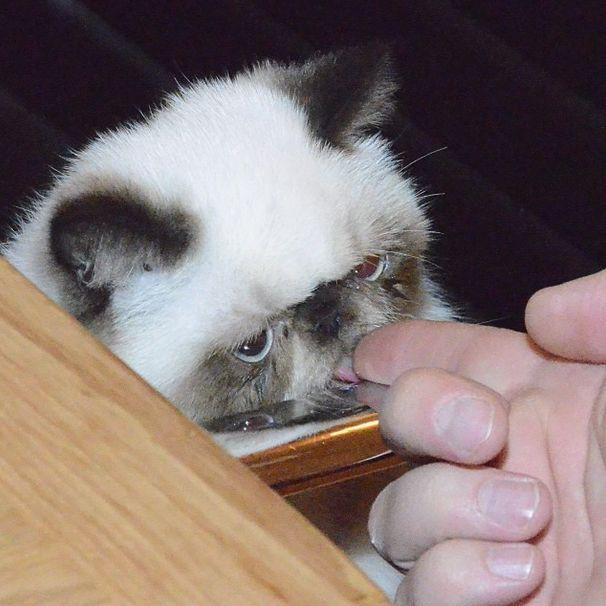 Pugsley the Kitty (30 pics)