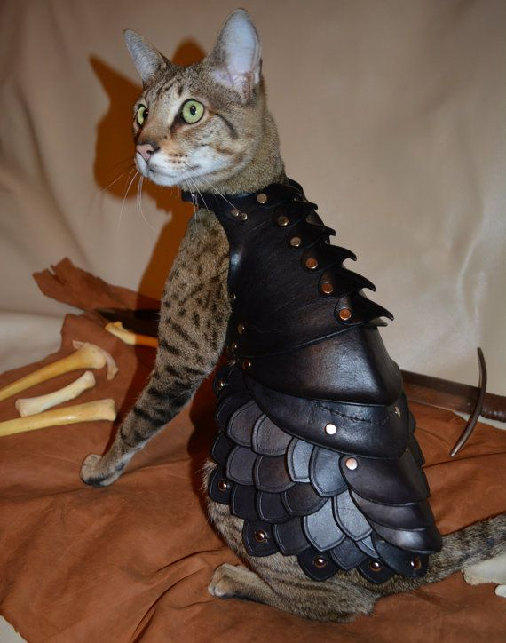 Cat Battle Armor (5 pics)