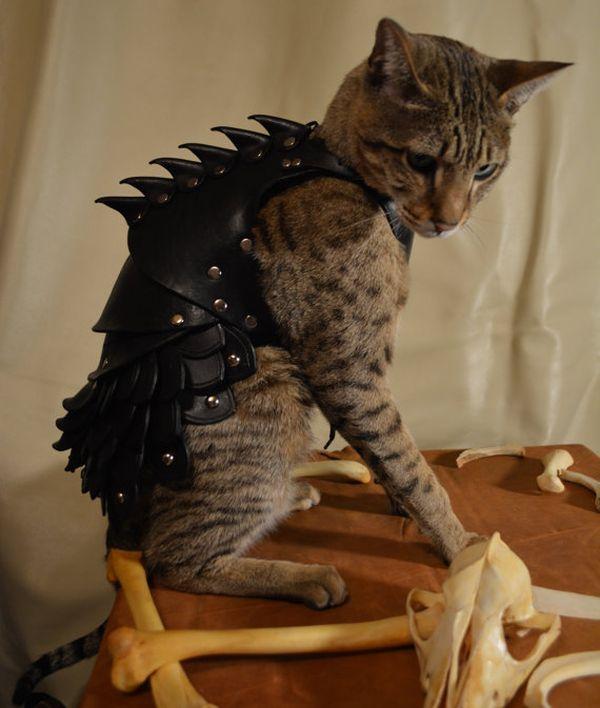 Cat Battle Armor (5 pics)