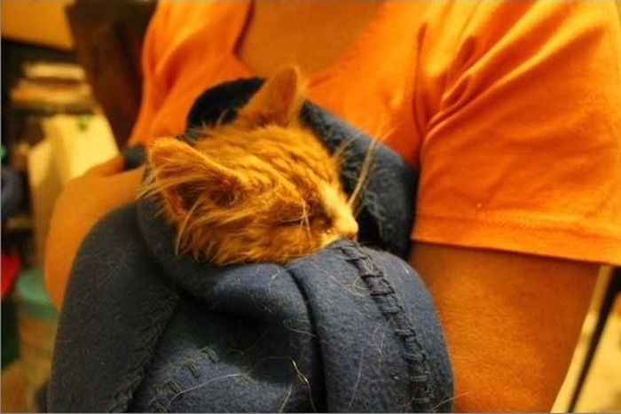 Rescued Kittens (15 pics)