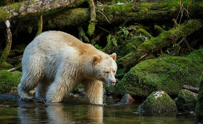 Nature Photography (35 pics)