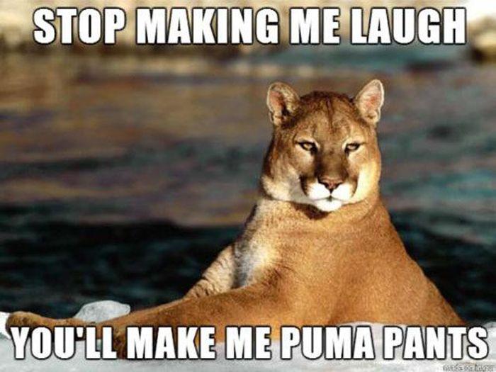 Funny Puns. Part 12 (36 pics)