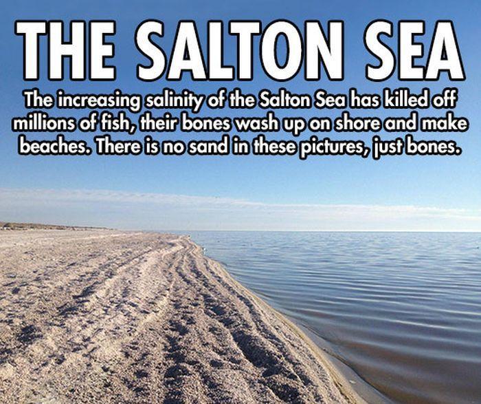 Salton Sea (5 pics)