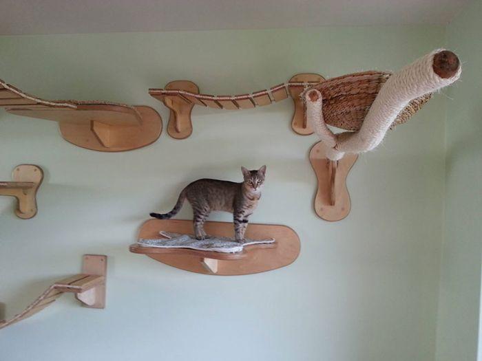 Cats' Playground (10 pics)