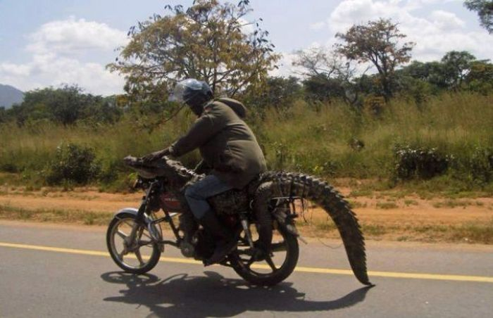 Only in Africa. Part 3 (44 pics)