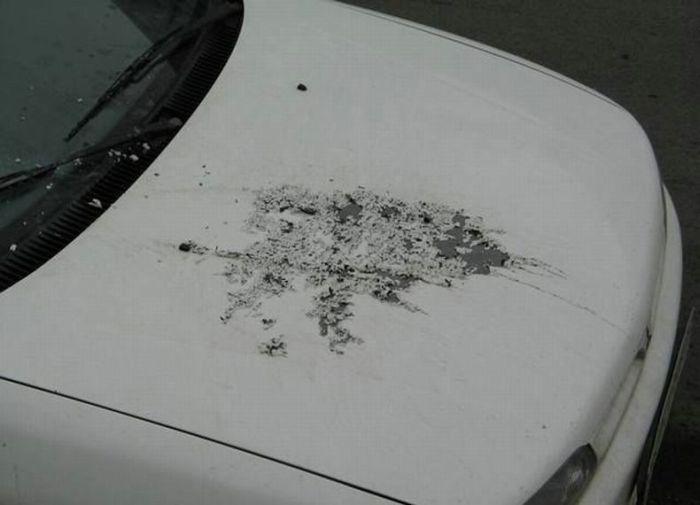 Car Revenges (51 pics)