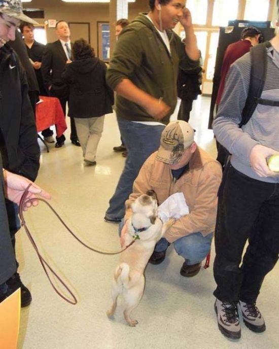 Blind Pug Xander (14 pics)
