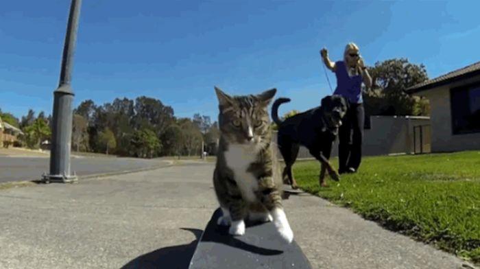 Didga, the Skateboarding Cat (8 gifs)