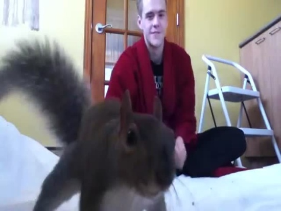 Cute Pet Squirrel Plays With Master