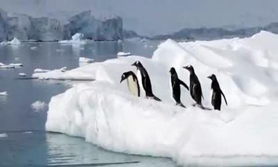 Hilarious Penguins Compilation