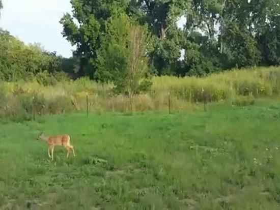Cute Deer Comes to Meet Hunters