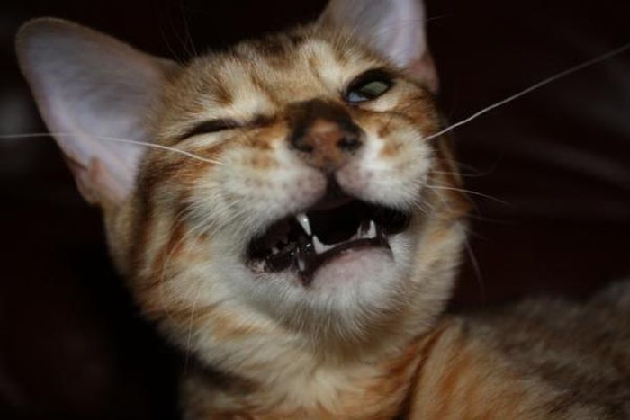 Dogs and Cats Caught Mid-Sneeze (45 pics)