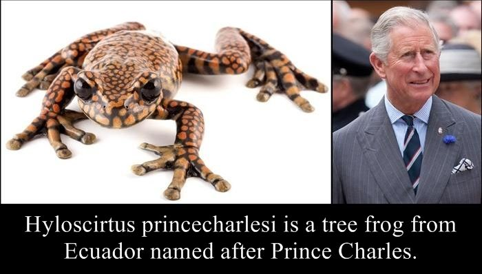 Species Named After Famous Persons (20 pics)