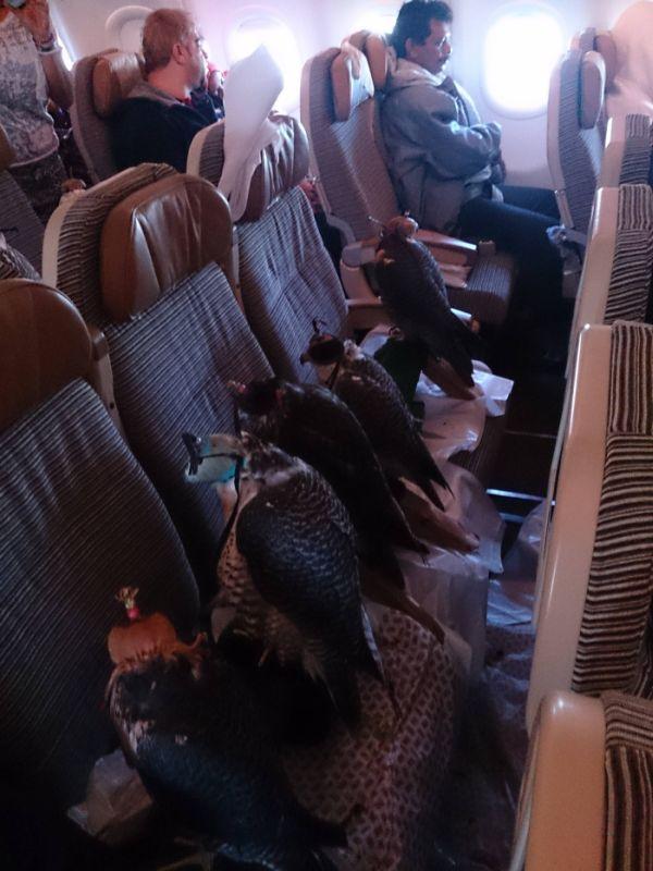Strange Passengers (4 pics)