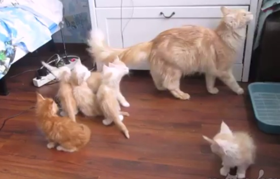 Mother Cat Testing Its Kittens Reaction