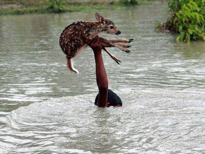 Boy Saves a Fawn (11 pics)