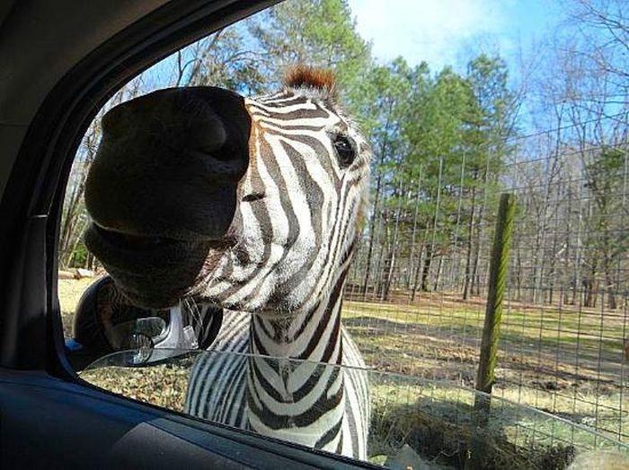 Harmony Park Safari (40 pics)