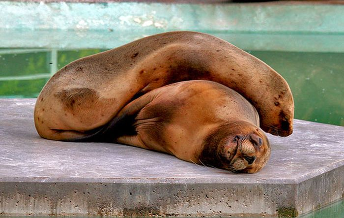 Animals Using Each Other As Pillows (31 pics)