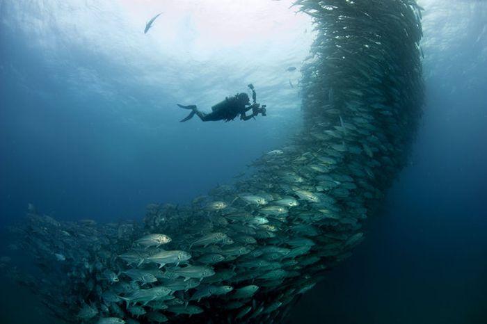 Fish Tornado (6 pics)