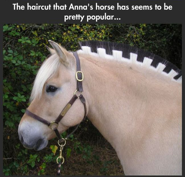 The Horses in Frozen are Real (7 pics)