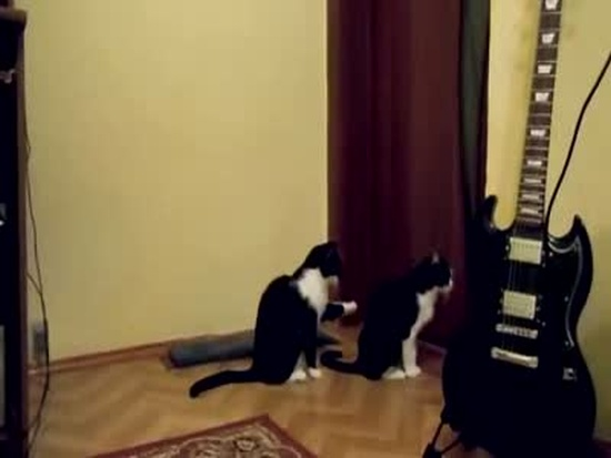 How Cats Ask for Forgiveness