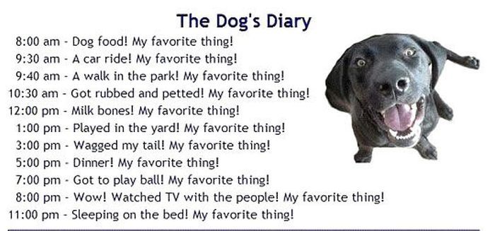 Your Pets' Diaries (4 pics)