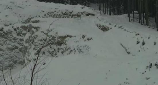 The Luckiest Deer Close Call