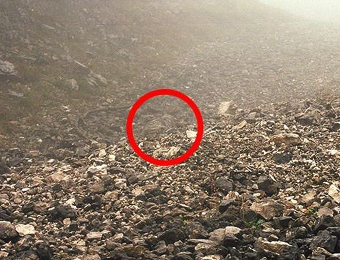 Find the Snipers (18 pics)