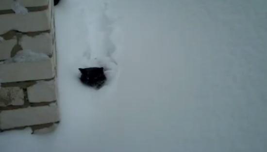 Cat Hates to Walk on Deep Snow