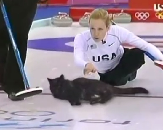 Playing Olympic Curling With Lazy Cats