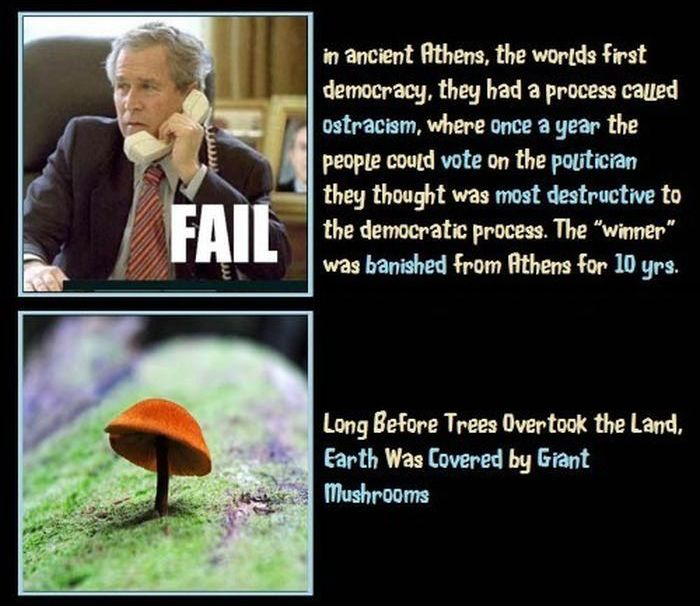 Unbelievable but True Facts. Part 5 (12 pics)