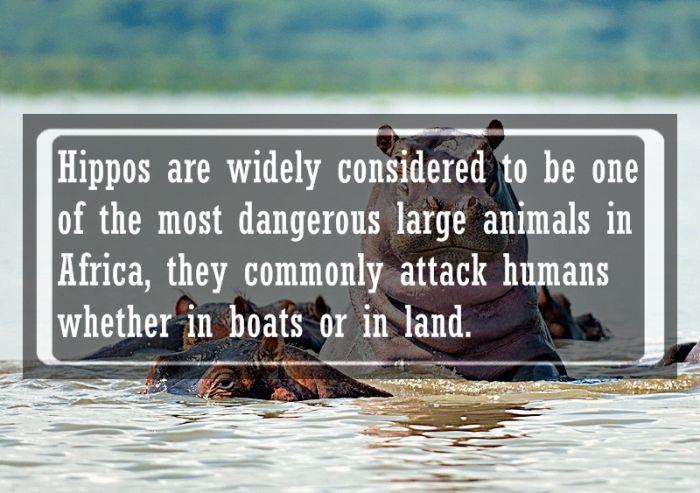 Animal Facts (24 pics)