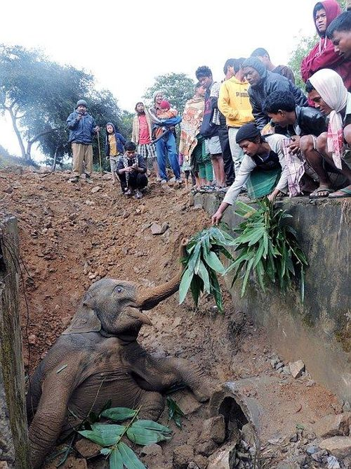 Baby Elephant in Trouble (7 pics)