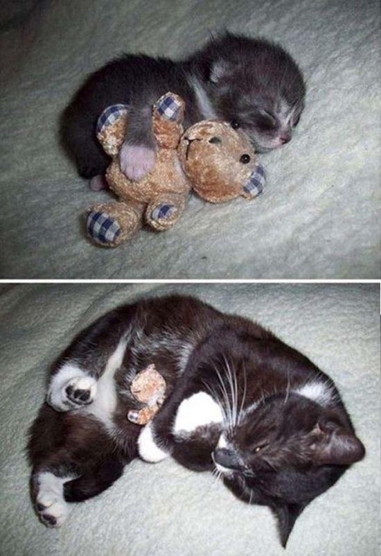 Cuteness Overload (46 pics)
