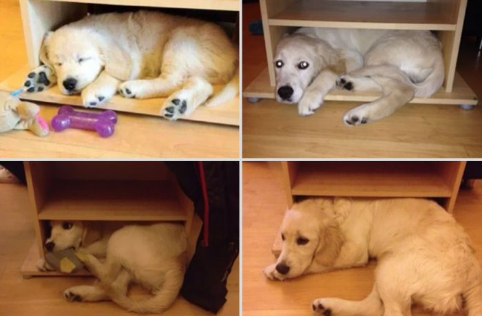 Before And After Pictures Of Animals Growing Up (22 pics)
